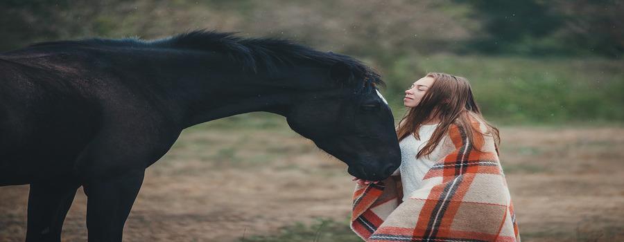 Лечение травм у лошадей с помощью ветеринарного тейпирования